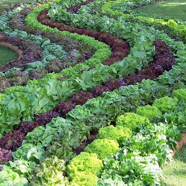 easymulch helps you grow the best vegetables and salad greens